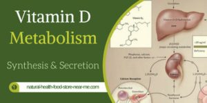 Vitamin D Metabolism – Synthesis and Secretion