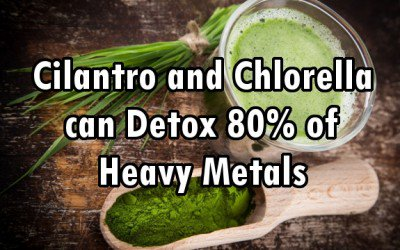 chlorella_wheatgrass mercury detox
